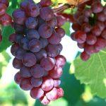 Những nguyên nhân chính tạo nên sức hút cho rượu vang trên thị trường
